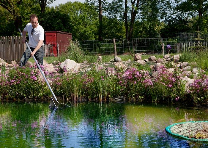 Fischteich Pflege im Frühjahr
